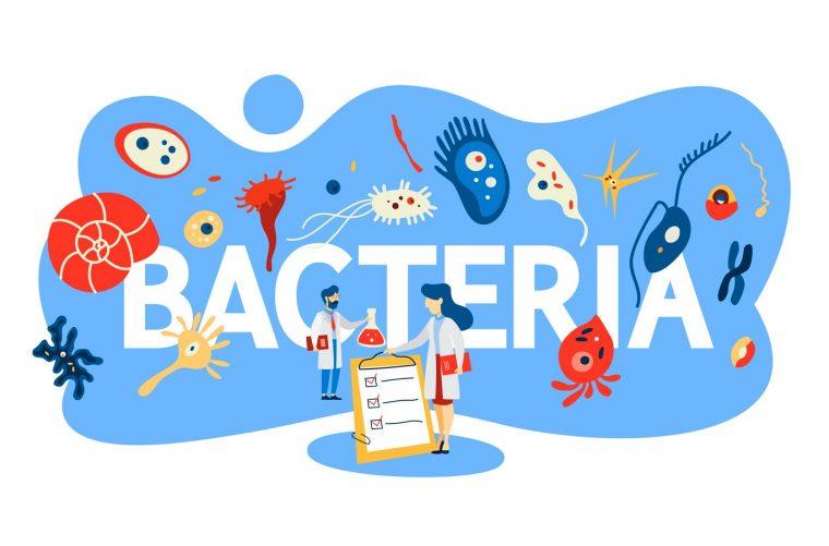 Concepto de bactería