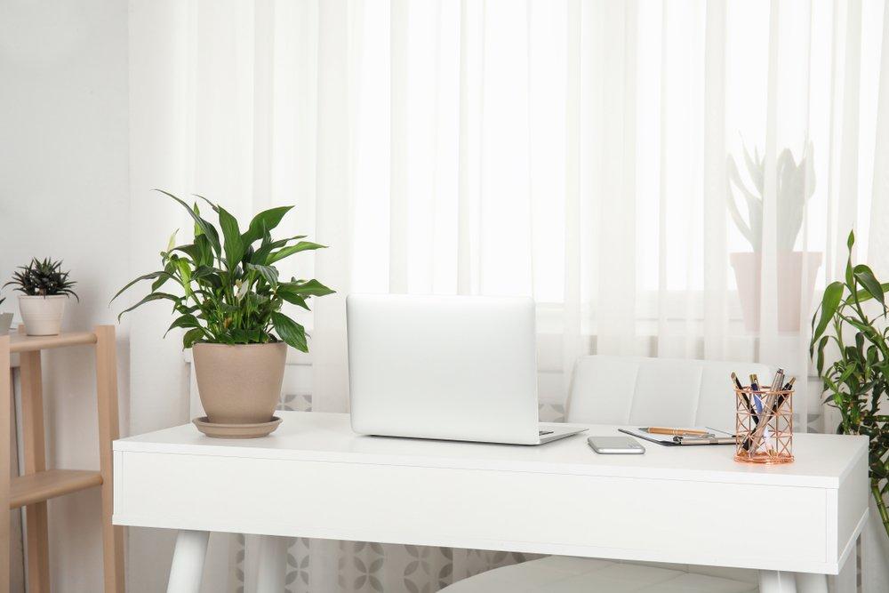 escritorio decorado con plantas