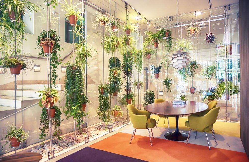 plantas en tu oficina