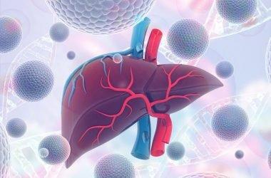 Ilustración hígado humano